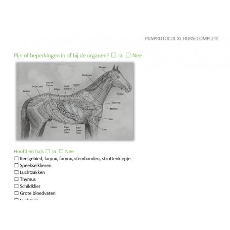 Pijnmeting volgens het pijnprotocol XL versie